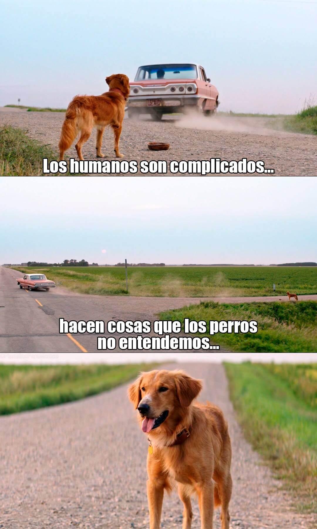 Ir a la pagina de la plantilla Los humanos son complicados... | Hacen cosas que los perros no entendemos....