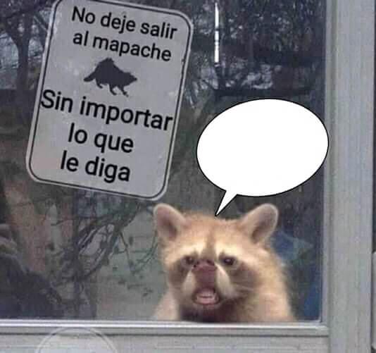 Plantilla de No deje salir al Mapache