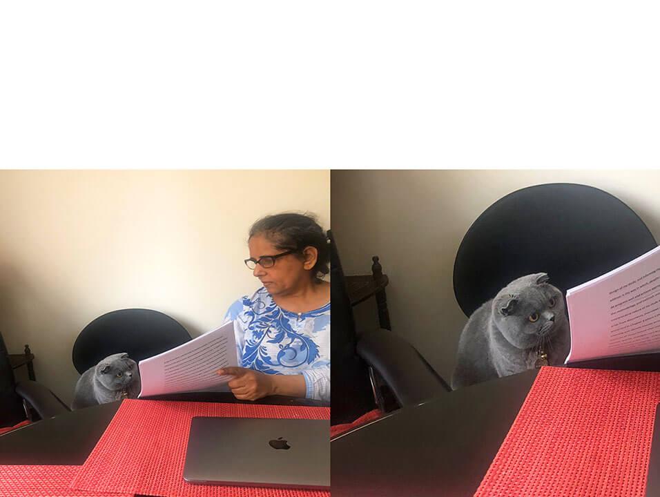 Ir a la pagina de la plantilla Señora explicando algo | Gato observando | ¿Y por que pusiste... ?.